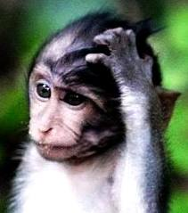 monkey confused about funding
