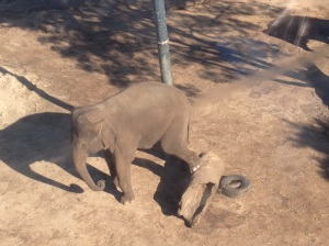 Elephants from above!
